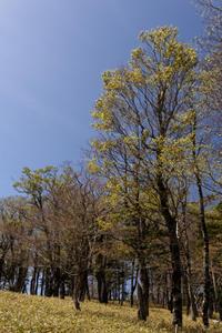 大台ケ原② ~シオカラ谷周辺 - katsuのヘタッピ風景