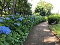 蟹ヶ谷公園 - つれづれ日記