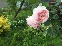 ER キャスリンモーレー -  お花とハーブのアトリエ muguette