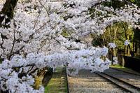 桜咲く京都2018 蹴上インクライン - 花景色-K.W.C. PhotoBlog