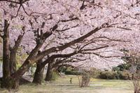 春の愛媛帰省⑦池田池公園 - 息子と写真がすき。