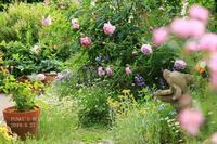 5月の庭***で♪ PART5 (+ そして3年^^) - FUNKY'S BLUE SKY