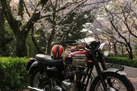 お花見ツーリング - TRIUMPH&OUTDOOR