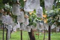 稲城の梨松乃園 - 困難の中にこそ美がある