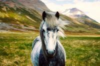 自分の話:過去世編・アイスランドの記憶① - アトリエkeiのスピリチュアルなシェアノート