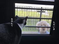 お犬好し - gin~tetsu~nosuke
