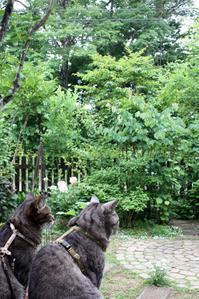 物憂い昨日 - 小さな森のキキとサラ