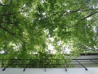 パッシブデザインと樹木の効用 - 『三牧の徒然日記』