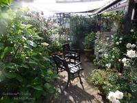 Mi jardín en el mes Junio. - Gardener*s Diary