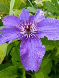梅雨入り 間近でしょうか。 - BluemounCoffee わたし日記
