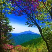 クリスタルピクシー - 表参道・銀座ネイルサロンtricia BLOG