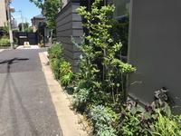 「梅ラウンジの庭」6月1週目(2年目) - HAN環境・建築設計事務所