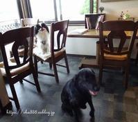 カフェ☆犬は笑うと思いますか - 狆の茶々丸