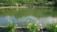 府中公園の花花花 - 優駿、大樹の下で和を奏でる~平屋暮らし*時々handmade~