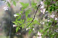 買い物おしゃべり、ジャスミンと雨 - イタリア写真草子 Fotoblog da Perugia