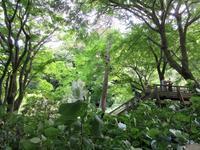 【北鎌倉・明月院】晴天の紫陽花さんぽ - お散歩アルバム・・秋日和