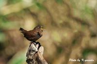 日光の野鳥 - 四季折々に・・・・・