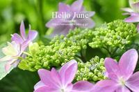 Hello June - Awesome!