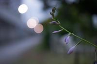 天王洲から運河沿いを歩く~夕暮れと花 - 柳に雪折れなし!Ⅱ