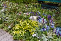 屋上庭園 - デジカメ写真集