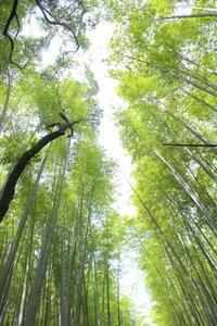 京都観光 〜嵐山〜 - クローバーのLife is cozy