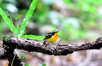 静かな森で3 - ひげ親爺の探鳥日記