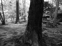 苔むした庭を歩く続き - カメラノチカラ