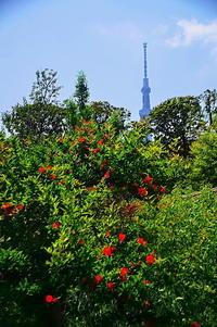 新世紀大江戸百景その2 - 風の香に誘われて 風景のふぉと缶