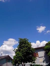 夏のような空と梅仕事 - 丁寧な生活をゆっくりと2