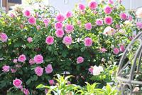 やっぱり大好き*ガートルードジェキル - my small garden~sugar plum~