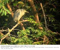 浮間公園 2018.5.27(1) - 鳥撮り遊び