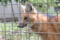 上野動物園の動物達 - 動物園に嵌り中