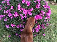 ワンコとお花と菜園 - ダイアリー