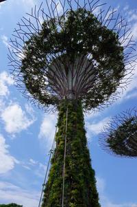 GWシンガポール~5月5日ガーデンバイザベイ 15 - Let's Enjoy Everyday!