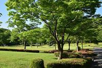 早朝散歩太陽が丘 - 無垢の木の家・古民家再生・新築、リフォーム 「ツキデ工務店」