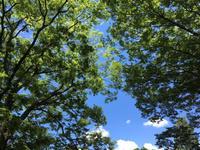 初夏の代々木公園は、ジョギングにとても適しています - やまなかつてない日々