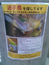 朝霞第七小学校前の電柱に迷い鳥の貼り紙、まさか - RÖUTE・G DRIVE AFTER DEATH