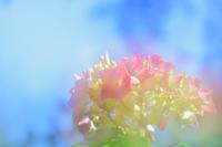 ブルーとピンクの饗宴 - 花々の記憶    happy_momo