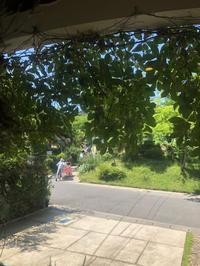 6/16(sun.)10:00~16:00小さなマーケットスティルの前の駐車場にて年に2回の小さなマーケット、初夏の巻! - cafe salon STILLROOM