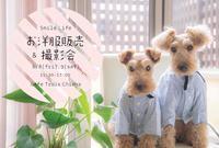 犬服の展示販売イベント - Smile Life