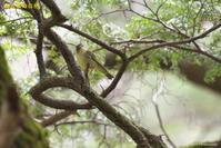撮った鳥全てシリーズ第二段 - 奥武蔵の自然