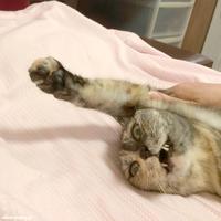 大ピンチ - 賃貸ネコ暮らし|賃貸住宅でネコを室内飼いする工夫