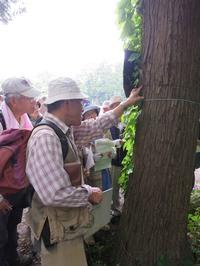 【第1回霞ヶ浦自然観察会「春の林にはどんな花が咲いているのか春の平地林をのぞいてみよう」を実施しました。】 - ぴゅあちゃんの部屋