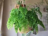 アジアンタム - Mini Botanical Life