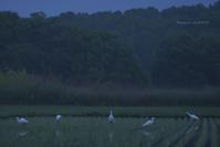 Five @ 水上池界隈(写真clickすることw - 東大寺が大好き
