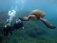 全然余裕~♪の、お二人でした(^^)v - 八丈島ダイビングサービス カナロアへようこそ!