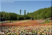 チューリップ・すずらんフェスタ 1 (滝野すずらん丘陵公園) - 北海道photo一撮り旅