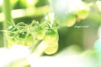 ワクワク - Angel Voice*