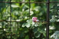 一歩ずつ - Poetry Garden 詩庭