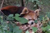 多摩の山岳地帯 - 動物園に嵌り中